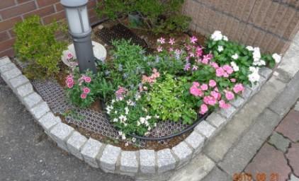 こちらの花壇もキレイに咲いていますよ。
