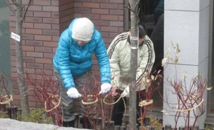 背の低い植栽はロープで固定