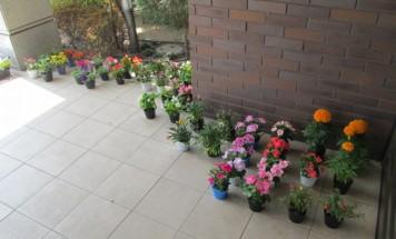 ポレスターステーションシティ本庄 第3回花植え会 2016年6月11日開催